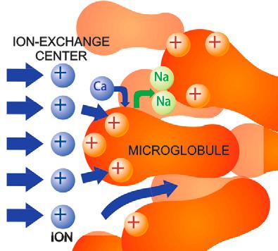 microglobule